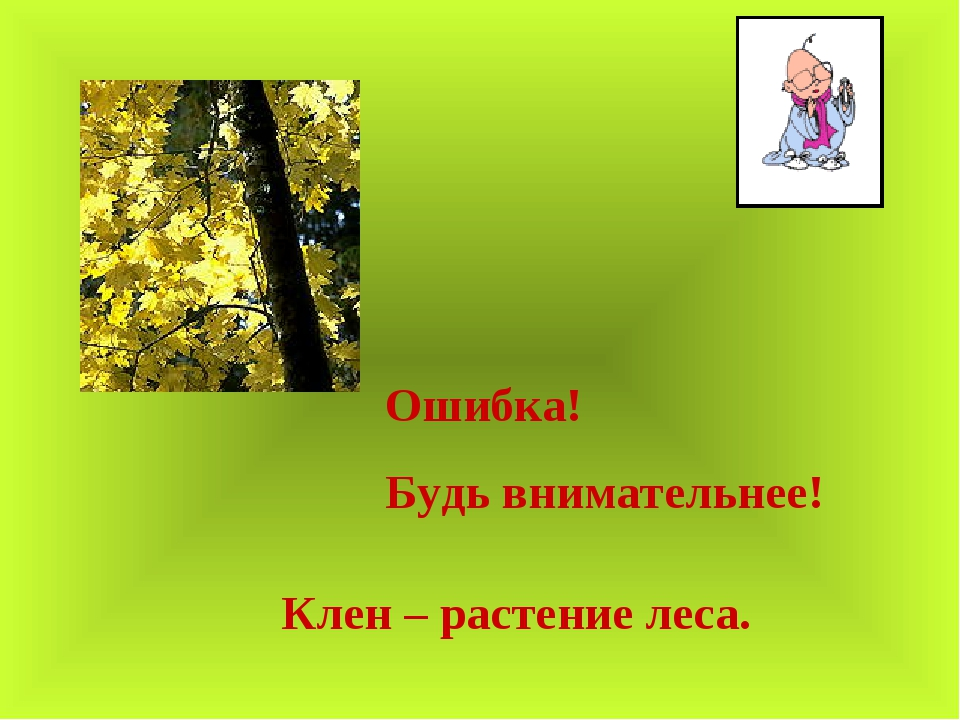 Ошибка! Будь внимательнее! Клен – растение леса.