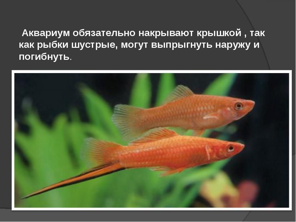 Реферат на тему аквариум 4697