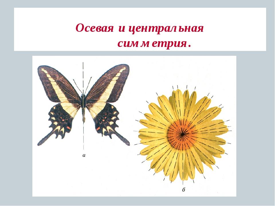 осевая симметрия в природе картинки примеры правило, линия