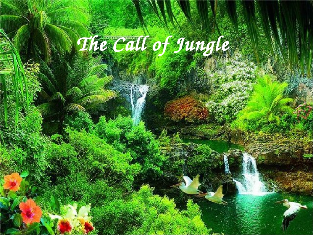 The Call of Jungle
