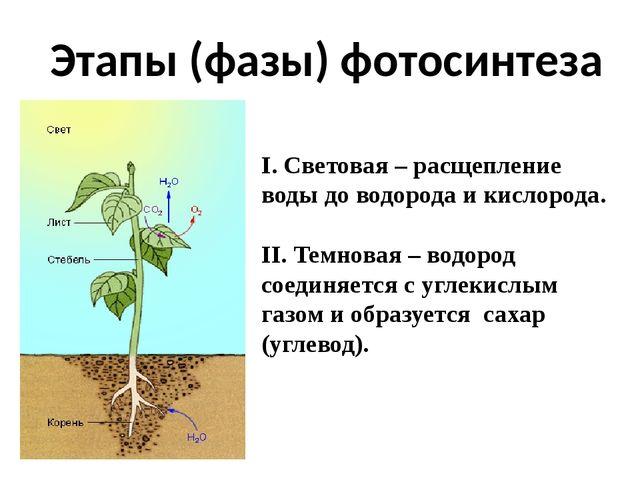 пройти тест по фотосинтезу этого