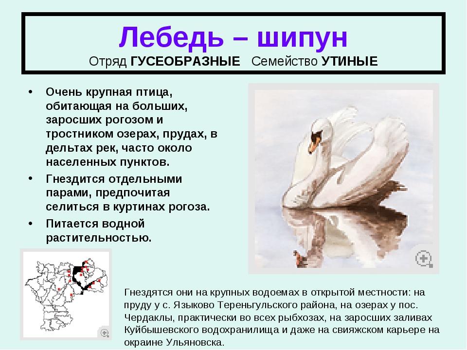 Птицы ульяновской области занесенные в красную книгу