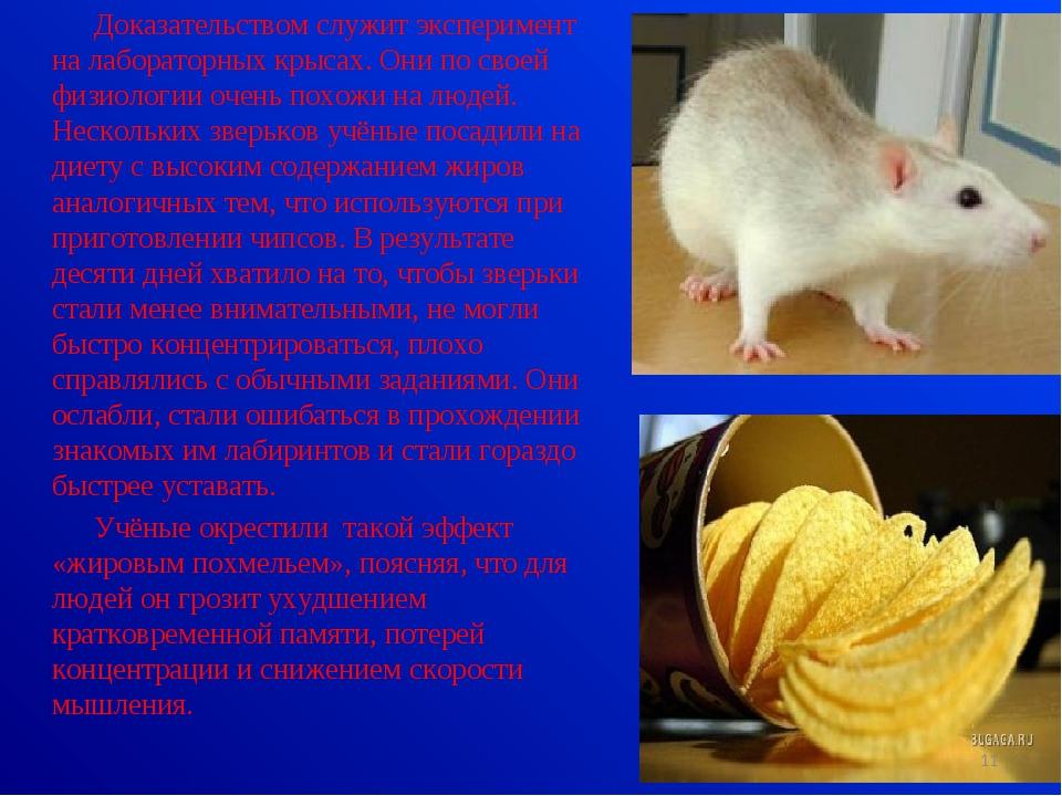 Доказательством служит эксперимент на лабораторных крысах. Они по своей физио...
