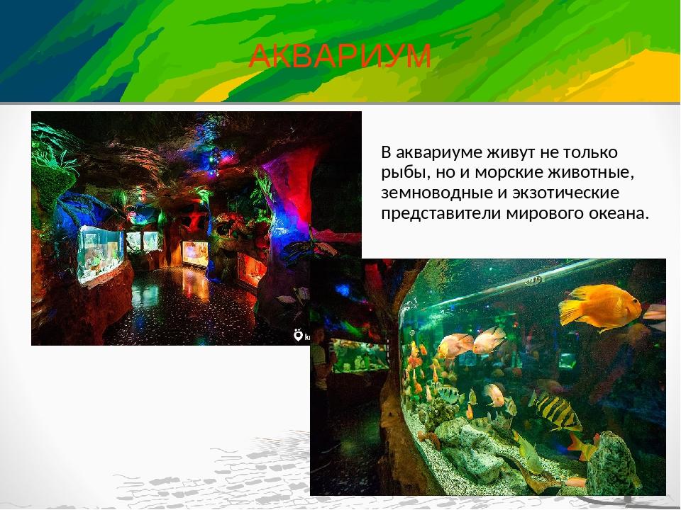 АКВАРИУМ В аквариуме живут не только рыбы, но и морские животные, земноводные...