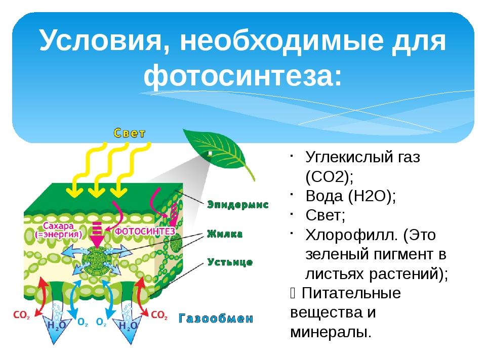 какова роль воды в процессе фотосинтеза гордон