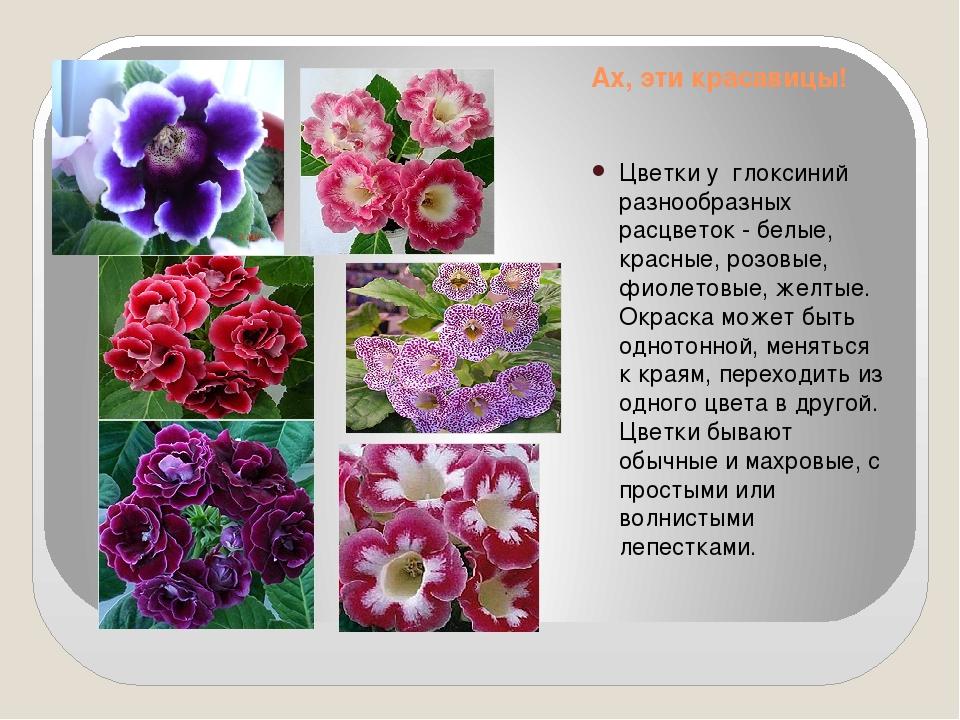 Ах, эти красавицы! Цветки у глоксиний разнообразных расцветок - белые, красны...