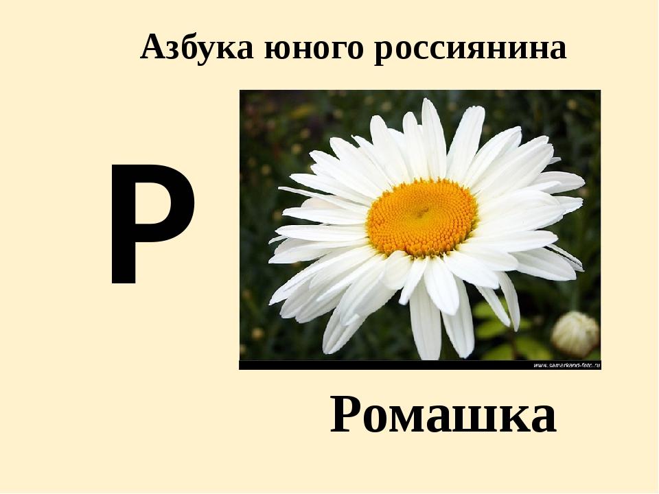 ходе азбука маленького россиянина в картинках сочли его возбуждающим