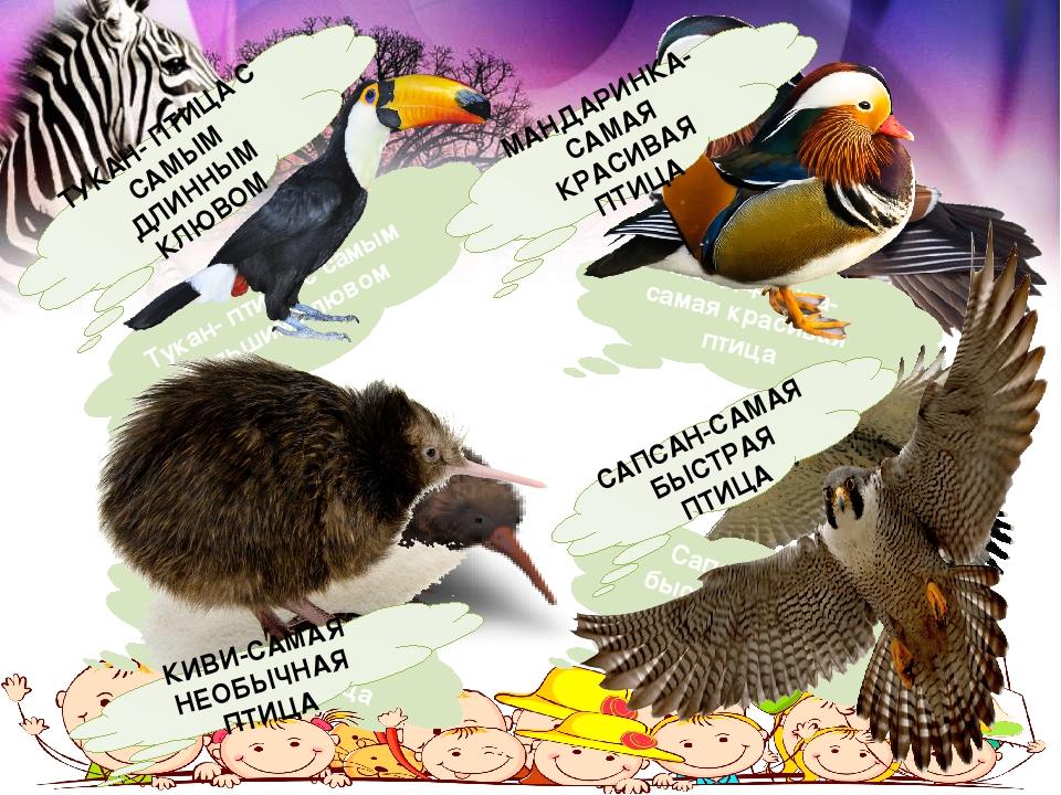 Тукан- птица с самым большим клювом Мандаринка-самая красивая птица Киви-сама...