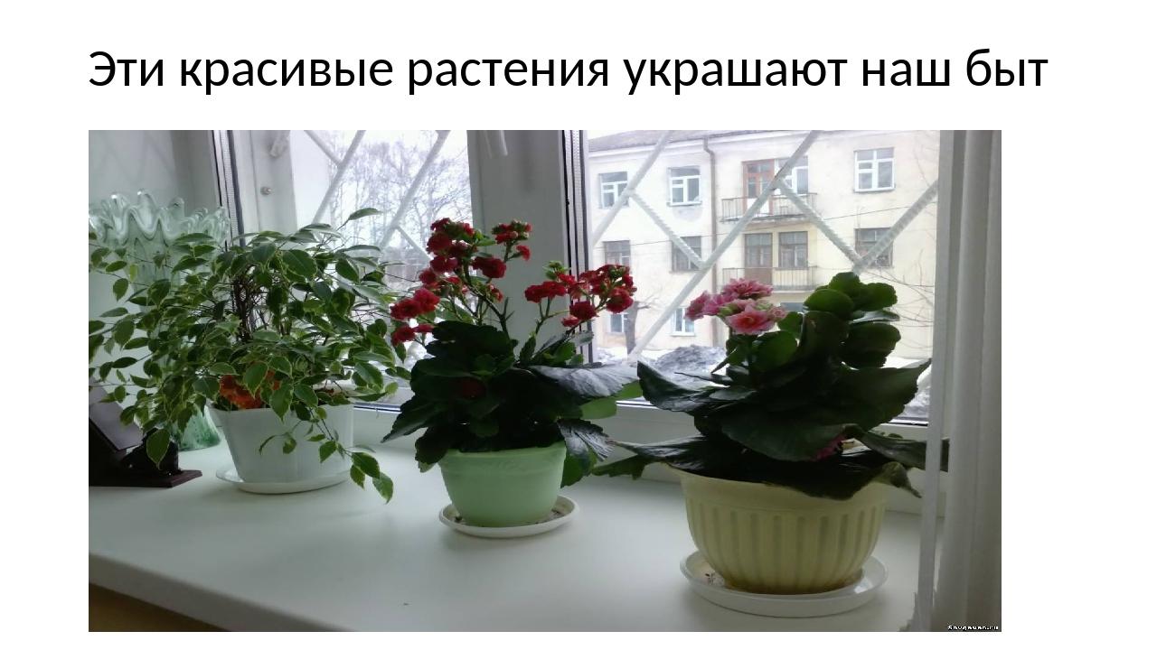 Эти красивые растения украшают наш быт