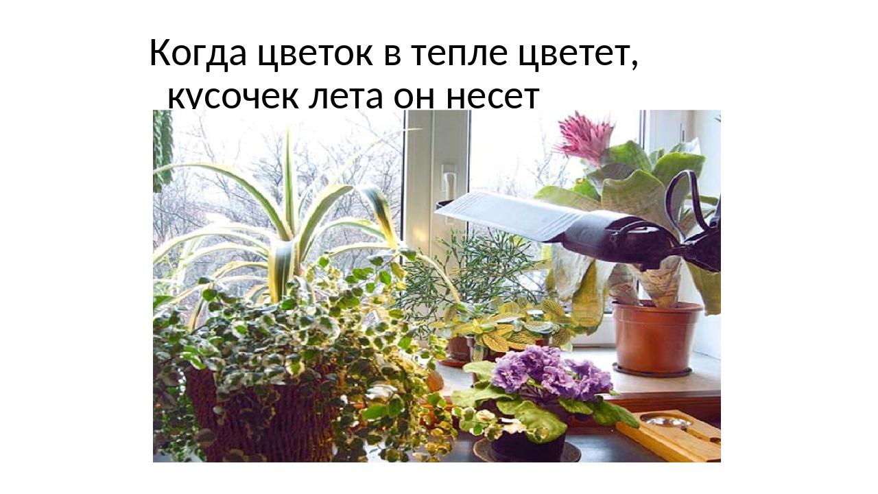 Когда цветок в тепле цветет, кусочек лета он несет
