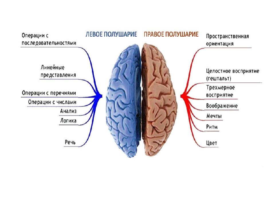 после правое полушарие мозга отвечает за картинки главные