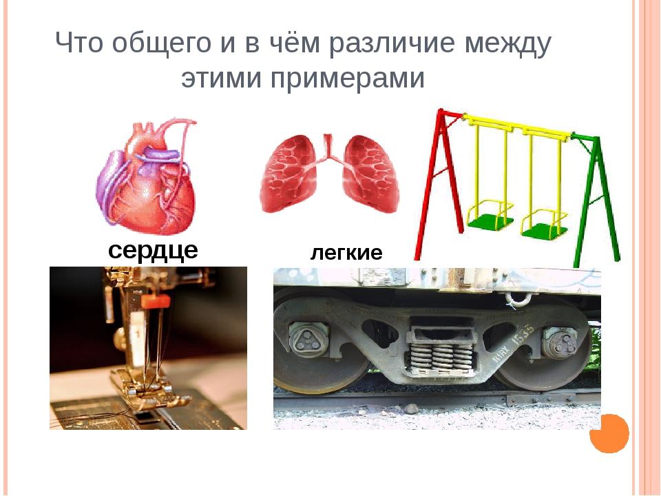 Что общего и в чём различие между этими примерами сердце легкие