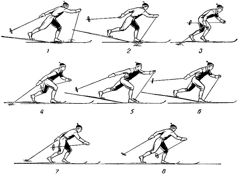 лыжные хода с картинками