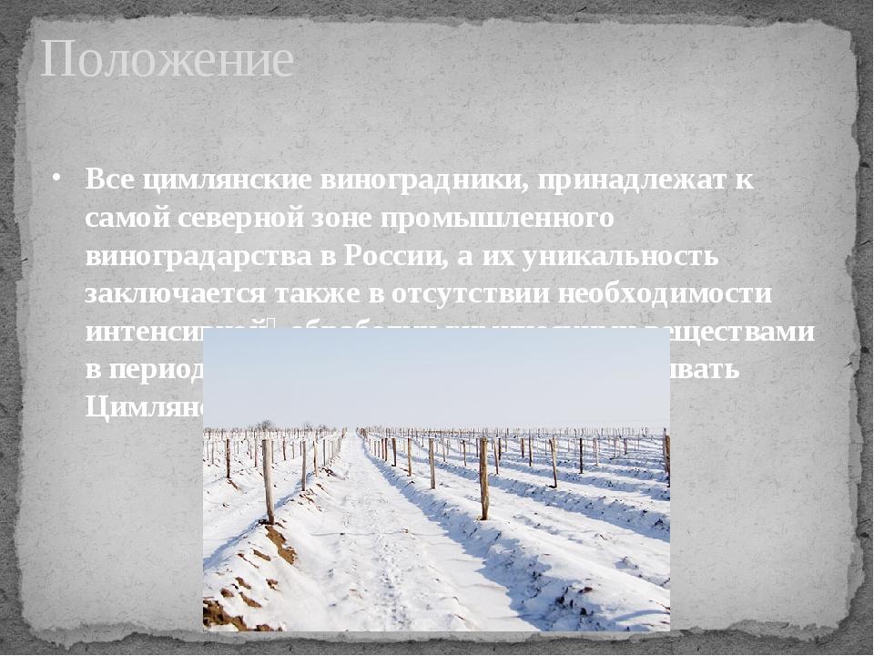 Все цимлянские виноградники, принадлежат к самой северной зоне промышленного...