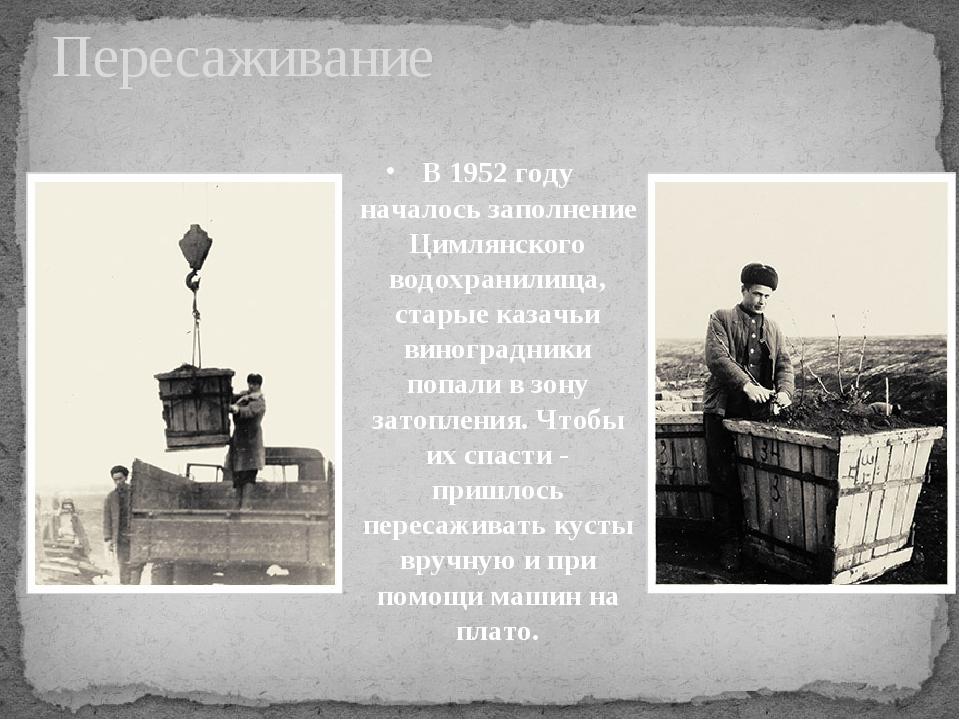 В 1952 году началось заполнение Цимлянского водохранилища, старые казачьи вин...