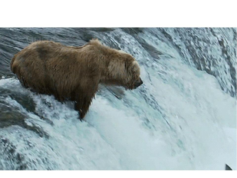 Сделать оригинальную, медведи гифка