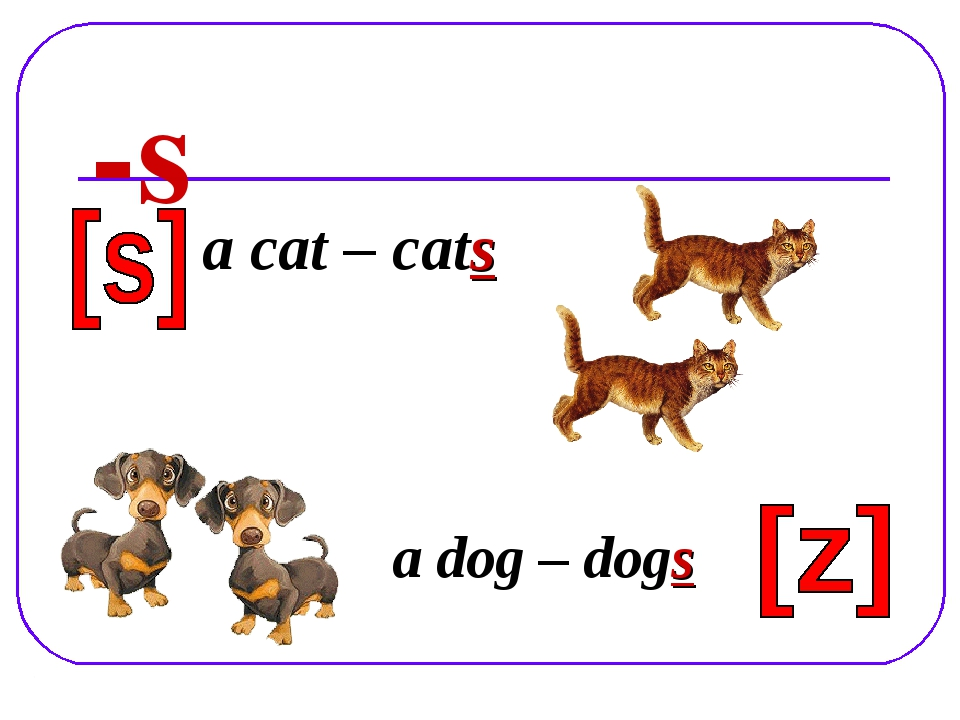 -s a cat – cats a dog – dogs
