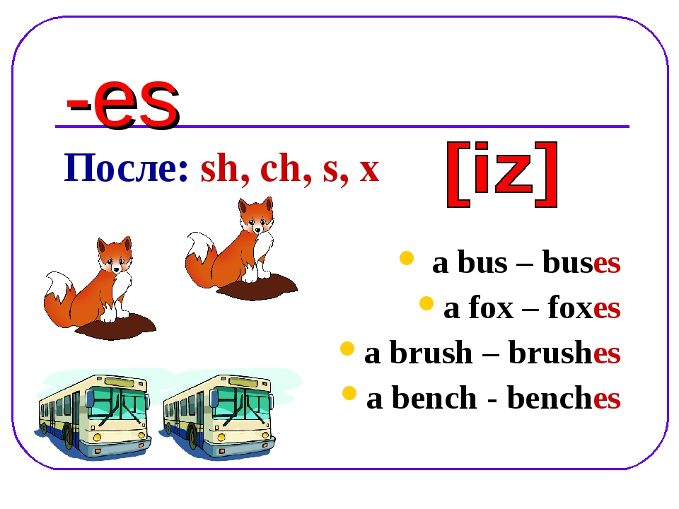 -es После: sh, ch, s, x a bus – buses a fox – foxes a brush – brushes a bench...
