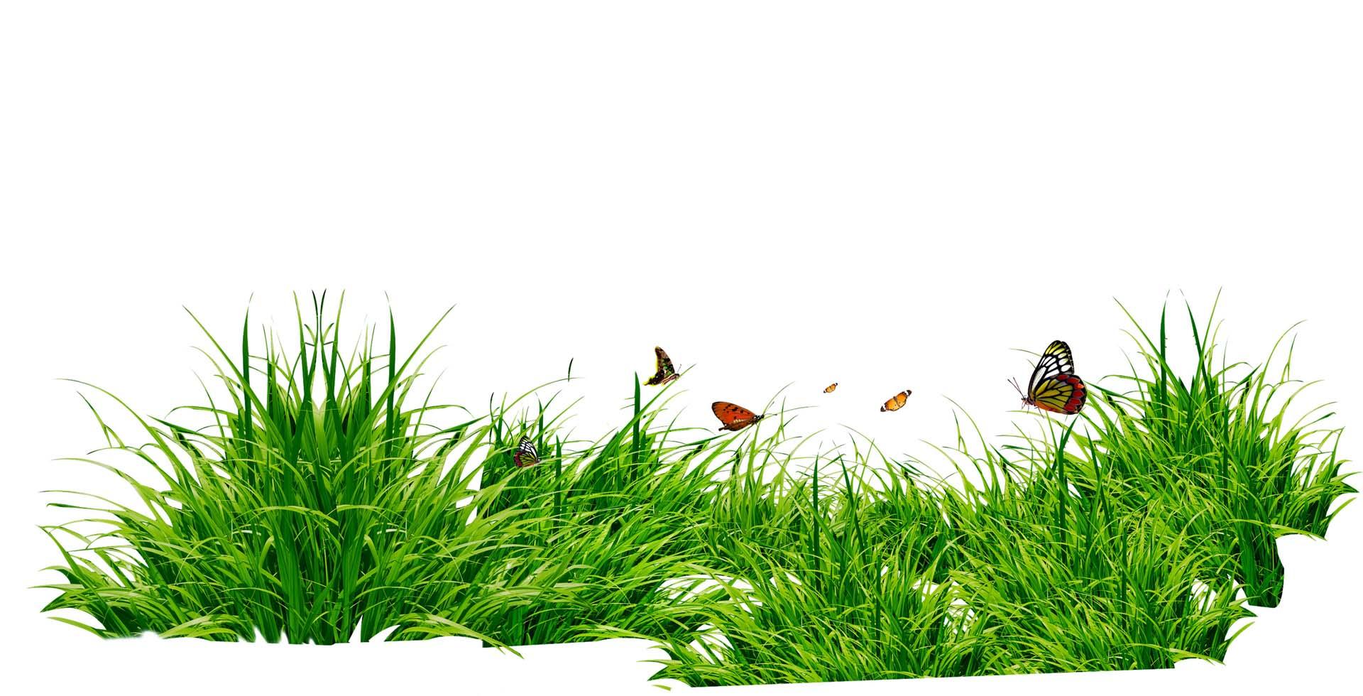 Картинка для группы лужайка