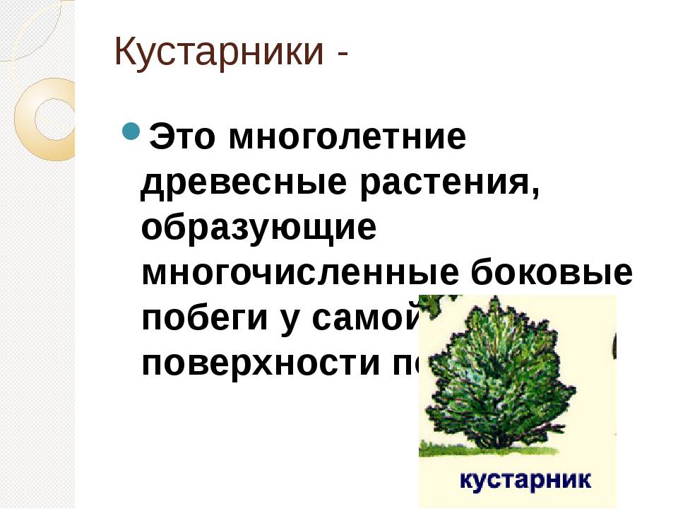 Кустарники - Это многолетние древесные растения, образующие многочисленные бо...