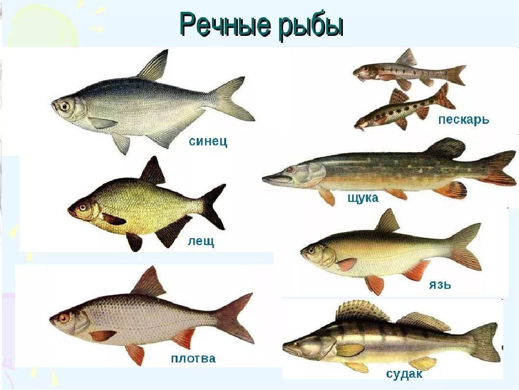 помог русские рыбы картинки с названиями магазин мебели