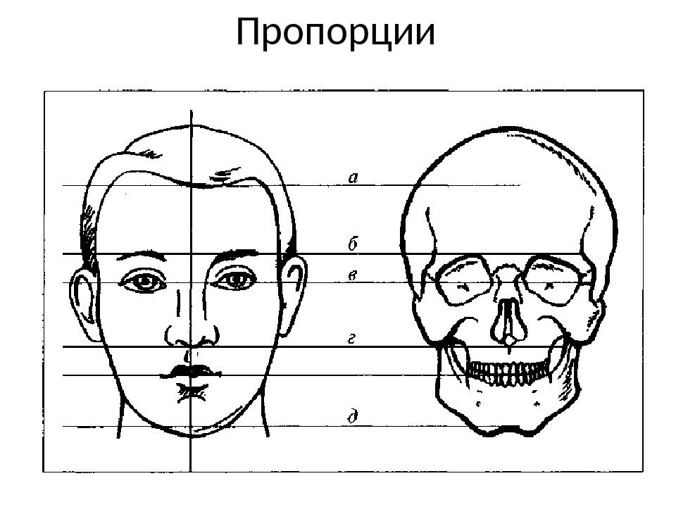 Пропорции