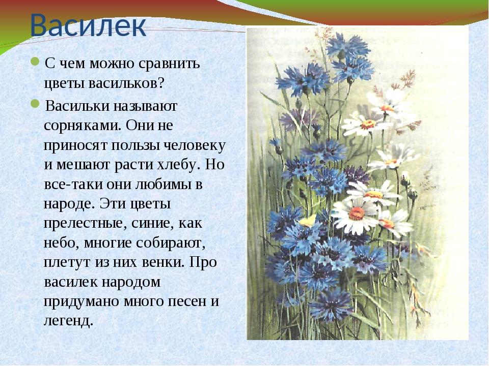 Василек стихи для детей