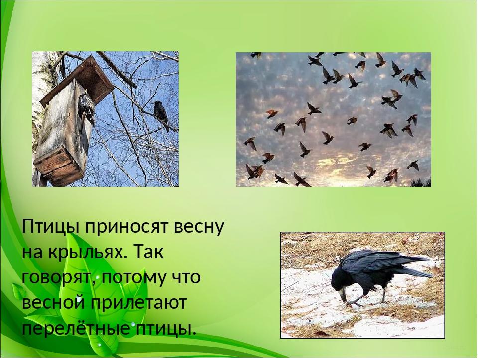 Пары прикольные, картинки на тему птицы весной для презентации