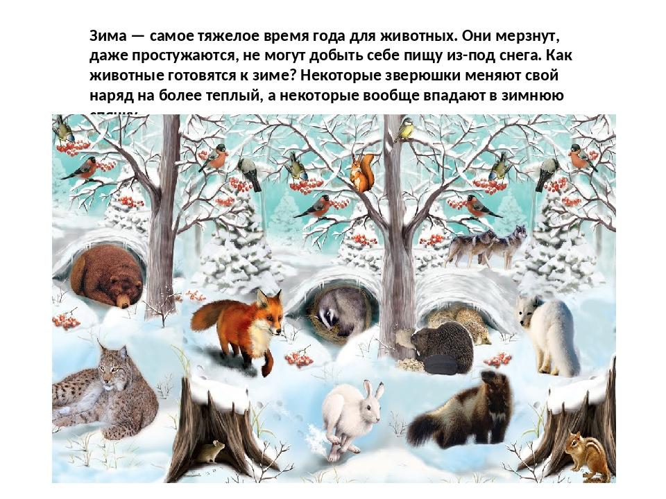 Животные зимой картинки для дошкольников