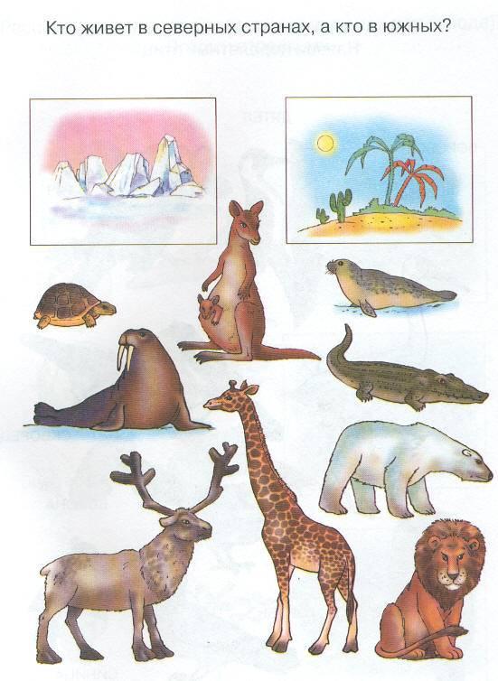 Большие картинка, картинки по окружающему миру для дошкольников