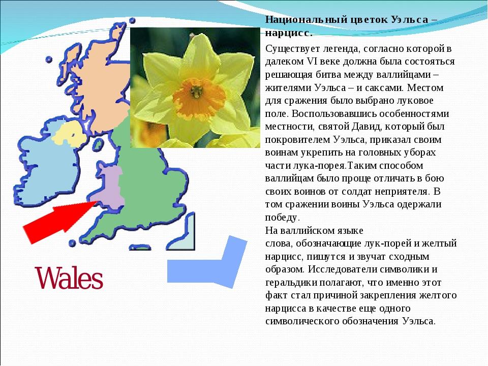 Национальный цветок Уэльса –нарцисс. Существует легенда, согласно которой в д...