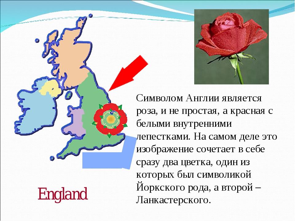 England Символом Англии является роза, и не простая, а красная с белыми внутр...