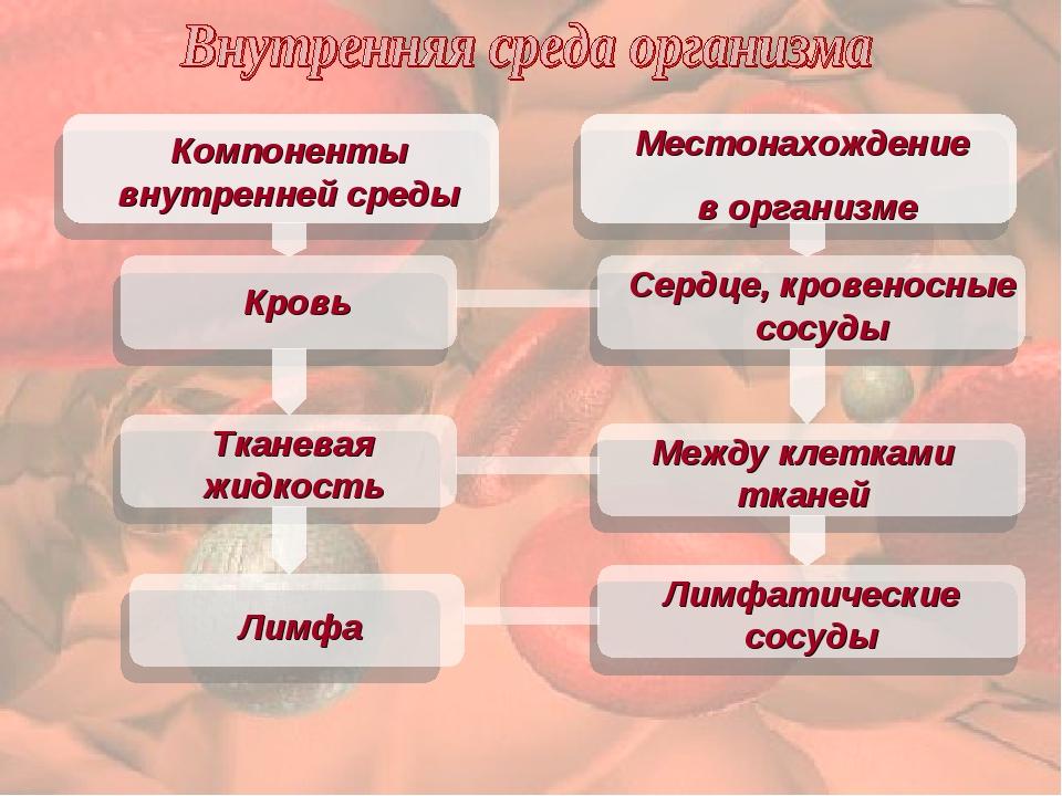 Местонахождение в организме Компоненты внутренней среды Кровь Тканевая жидко...