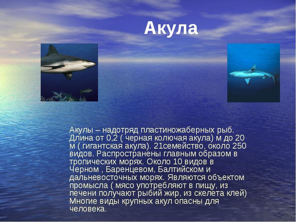Акулы – надотряд пластиножаберных рыб. Длина от 0,2 ( черная колючая акула) м...