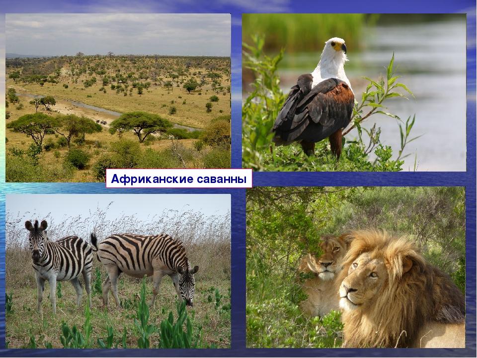 Африканские саванны