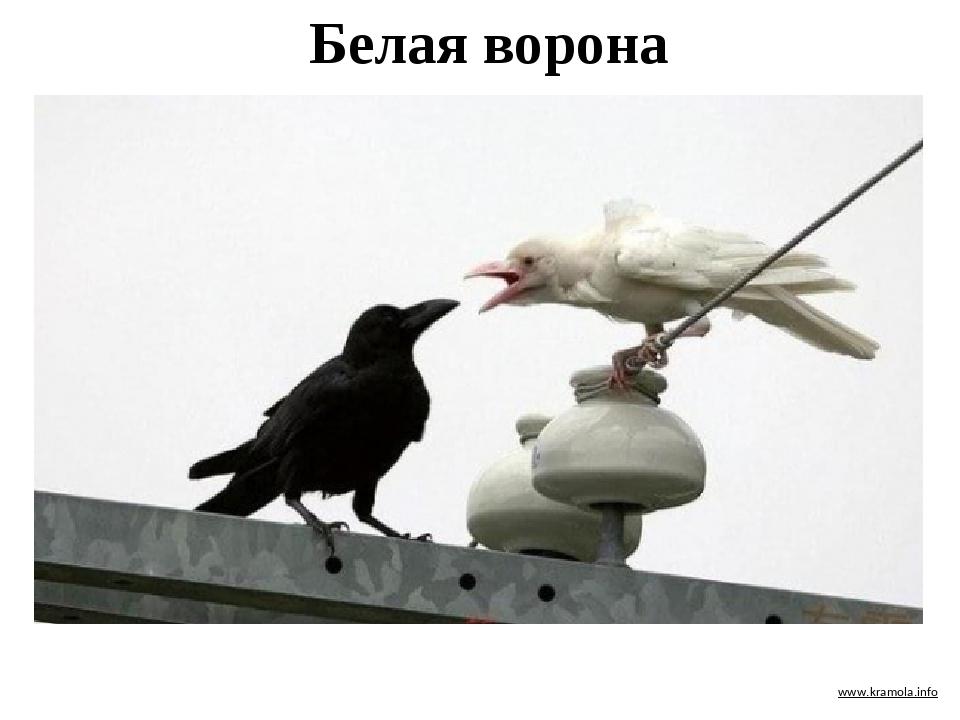 Демотиватор белая ворона