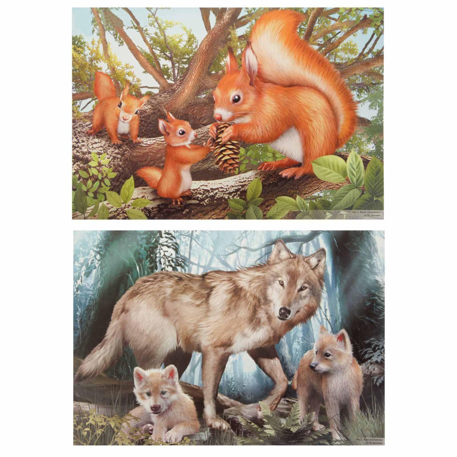 рисунок детенышей животных зависимости выбранного