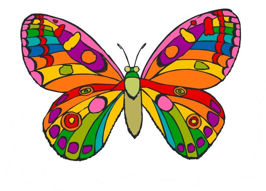 Смешные котята, картинки для детей бабочка