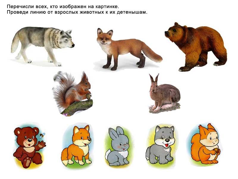 Зонтик, дикие животные и их детеныши картинки для детей дидактический материал