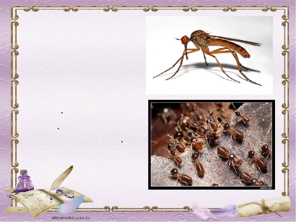 МОСКИТ Мелкое двукрылое кровососущее насекомое южных стран ТЕРМИТ Насекомое ж...