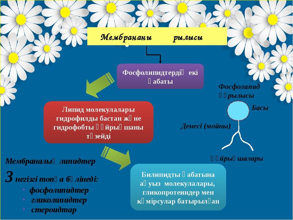 Мембрананың құрылысы Фосфолипидтердің екі қабаты Липид молекулалары гидрофил...