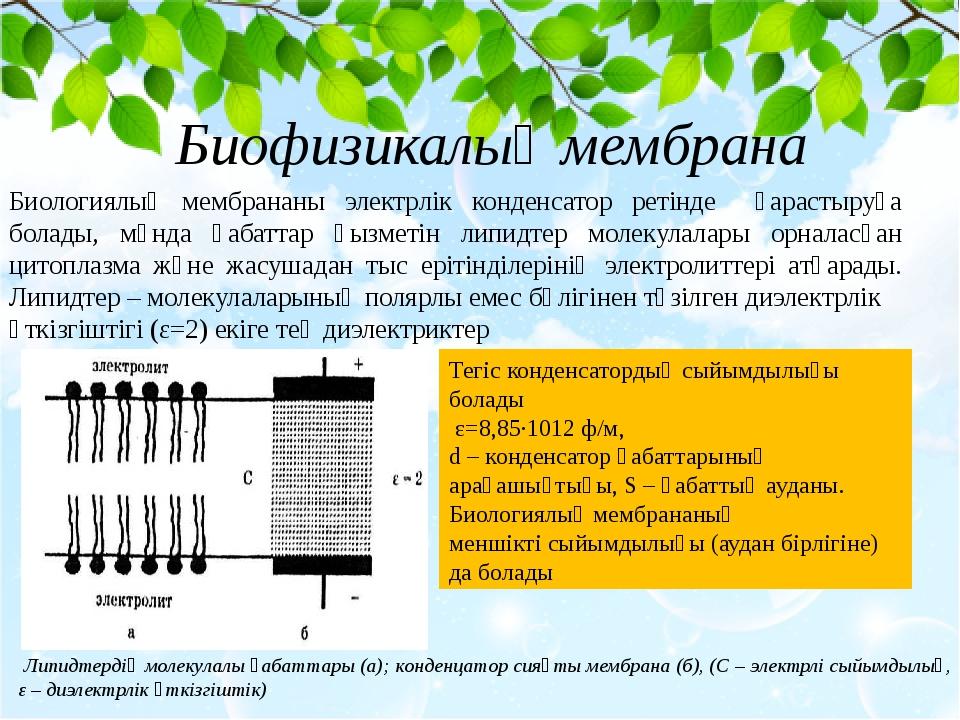 Биологиялық мембрананы электрлік конденсатор ретінде қарастыруға болады, мұн...