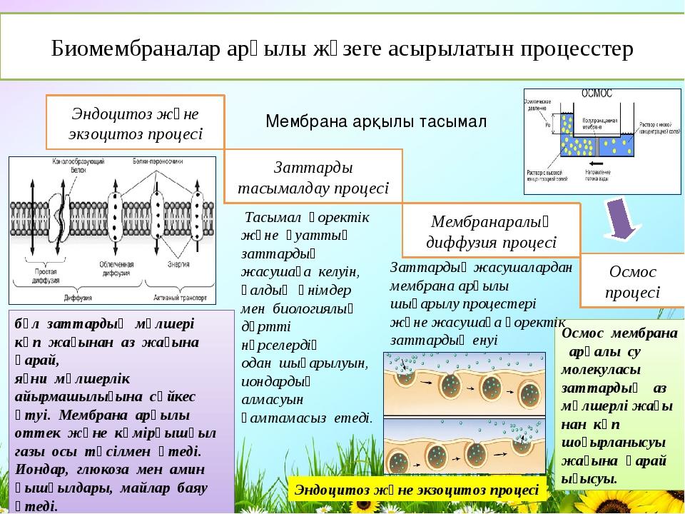 Биомембраналар арқылы жүзеге асырылатын процесстер Эндоцитоз және экзоцитоз...