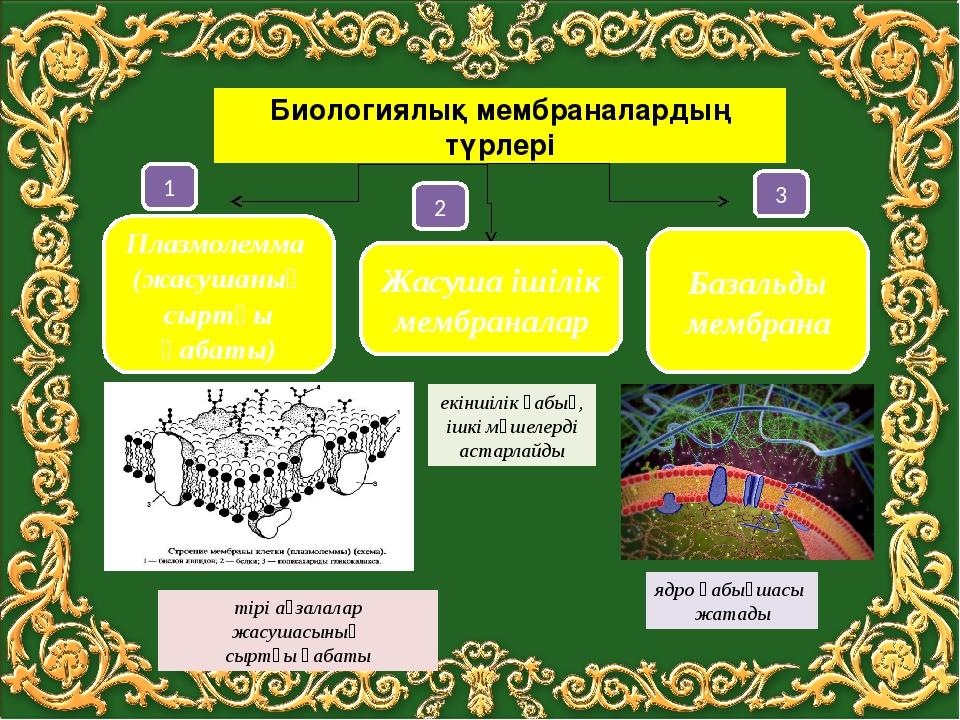 Биологиялық мембраналардың түрлері Плазмолемма (жасушаның сыртқы қабаты) Жас...
