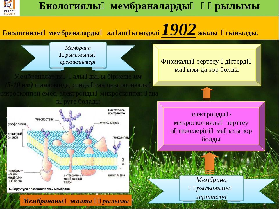 Биологиялық мембраналардың құрылымы Биологиялық мембраналардың алғашқы модел...