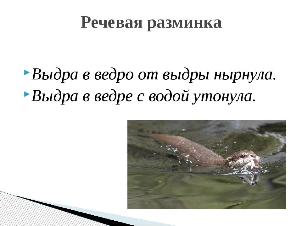Выдра в ведро от выдры нырнула. Выдра в ведре с водой утонула. Речевая разминка