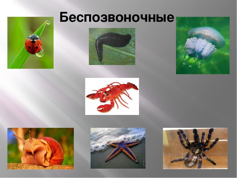 Картинки с прыгающими животными анимации цветы это