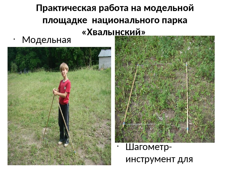 Практическая работа на модельной площадке национального парка «Хвалынский» Мо...