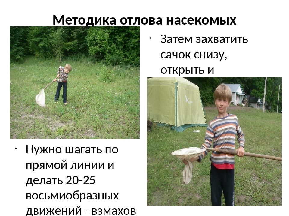 Методика отлова насекомых Нужно шагать по прямой линии и делать 20-25 восьмио...
