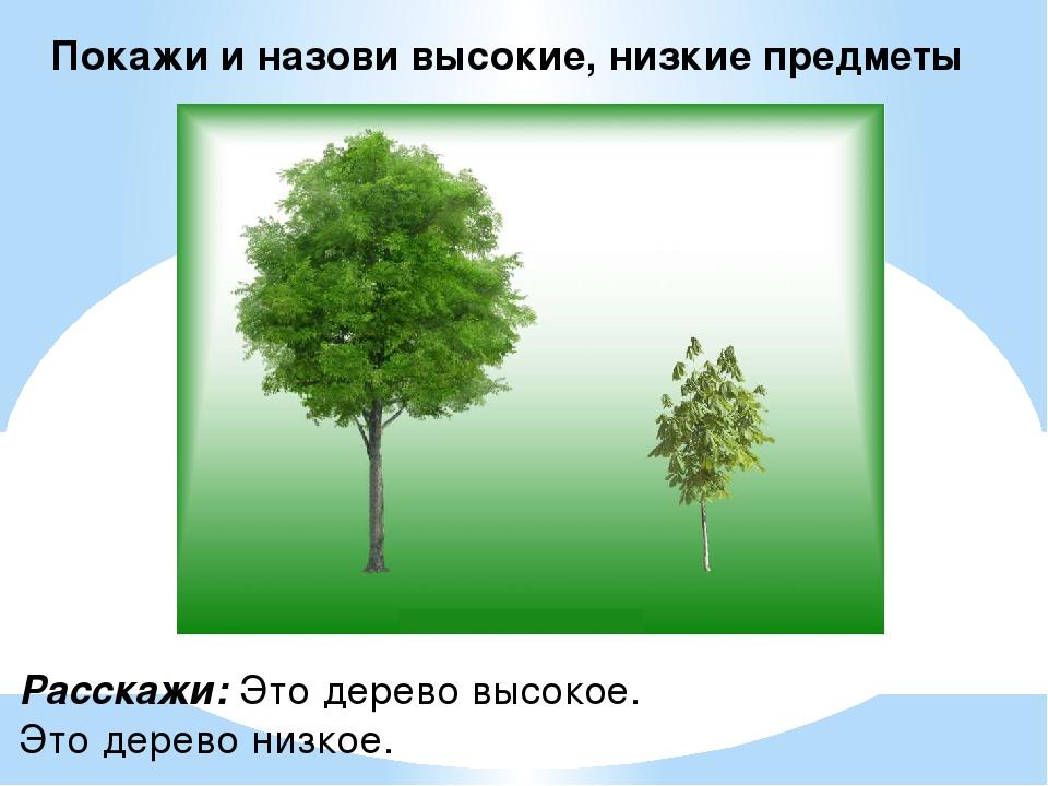 Покажи и назови высокие, низкие предметы Расскажи: Это дерево высокое. Это де...